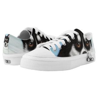 Pomsky Dog Shoes Lace Up