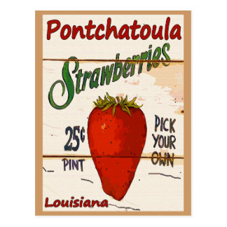 Ponchatoula Strawberries Card Postcard