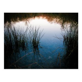 Pond Reflections Postcard