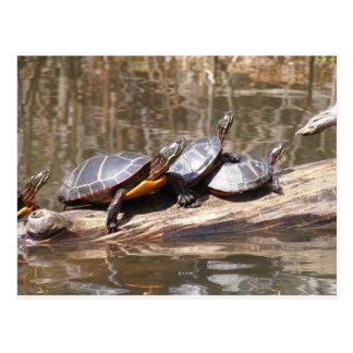 Pond Turtles Postcard