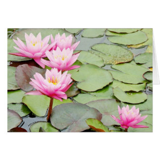 Pond Water Garden Waterlily Flower Floral Lilypads Card