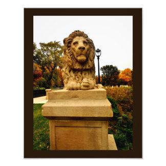 Pondering Lion Photo Print