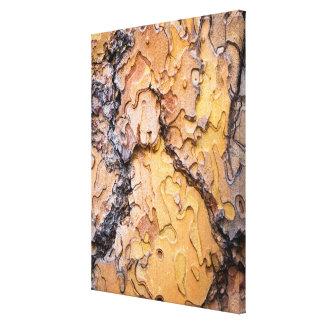 Ponderosa pine bark, Washington Canvas Print
