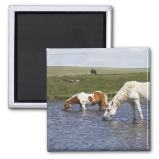 Ponies At Watering Hole Magnet