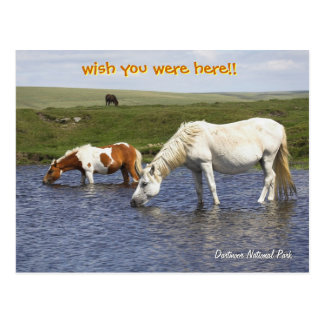 Ponies At Watering Hole post cards