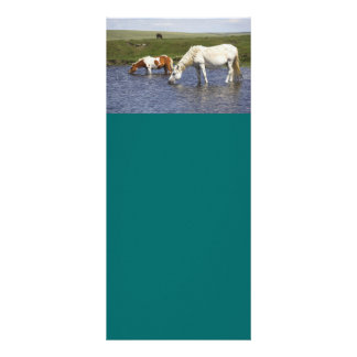 Ponies At Watering Hole rack cards