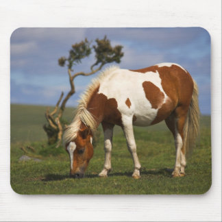 Pony And Lone Gorse mousepad