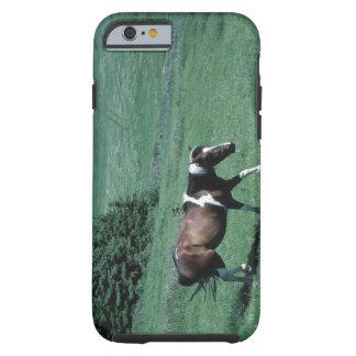 Pony in pasture tough iPhone 6 case