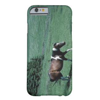 Pony in pasture barely there iPhone 6 case