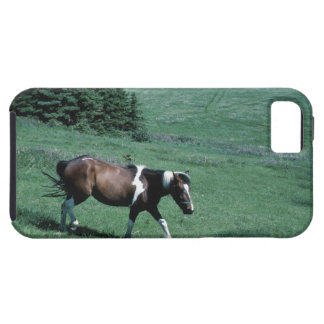 Pony in pasture iPhone 5 cover