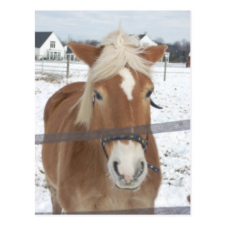 Pony in Winter Postcard
