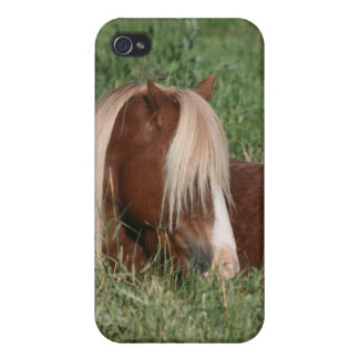 Pony portrait covers for iPhone 4