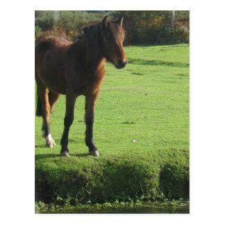Pony Postcard