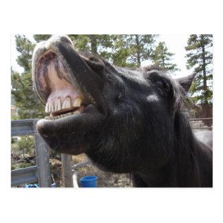Pony Talk Postcard