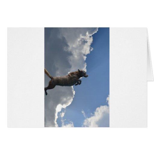 Poo Is Flying!.jpg Card