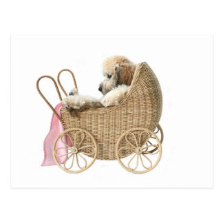 Poodle baby buggy post cards