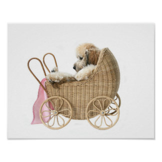 Poodle baby carriage poster