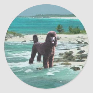 Poodle Beach Sticker