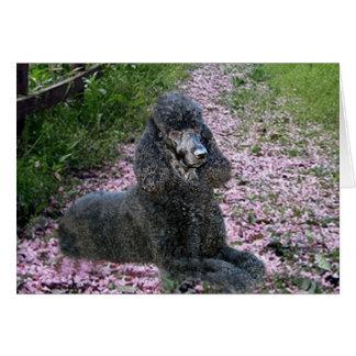 Poodle Black Card Flowers