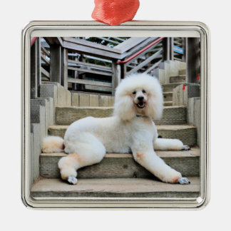 Poodle - Brulee - Trainer Silver-Colored Square Decoration