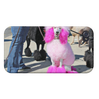 Poodle Day 2016 - Barnes - Pink Standard Poodle iPhone 4/4S Cover