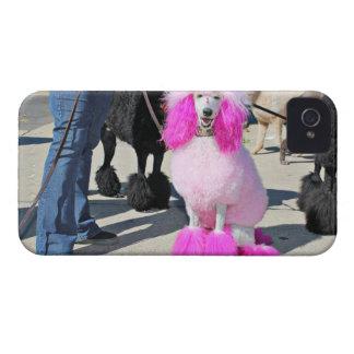 Poodle Day 2016 - Barnes - Pink Standard Poodle iPhone 4 Case