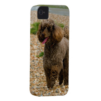 Poodle dog miniature beautiful photo at beach iPhone 4 cover