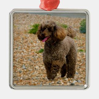 Poodle dog miniature beautiful photo at beach metal ornament