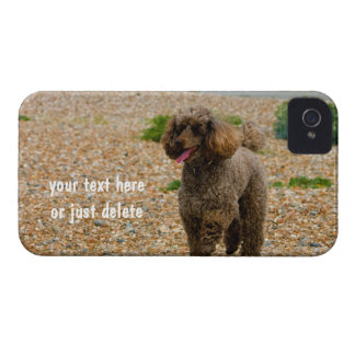 Poodle dog miniature beautiful photo beach custom iPhone 4 cover
