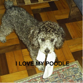 poodle love w pic silver photo sculpture key ring
