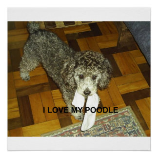 poodle love w pic silver poster