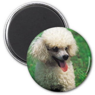 Poodle On Grass 6 Cm Round Magnet