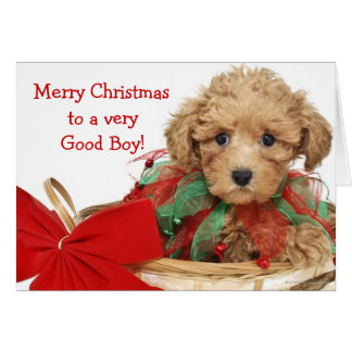 Poodle puppy sitting in Christmas basket Card