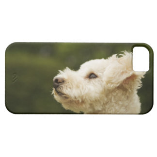 Poodle (white) 2 iPhone 5 covers