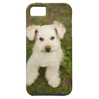 Poodle (white) tough iPhone 5 case