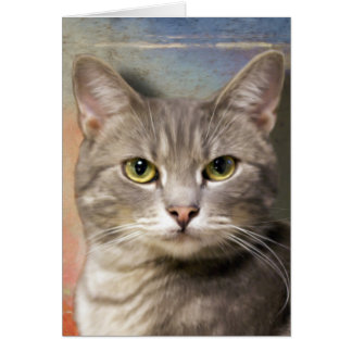 Pookie the Gray Cat Greeting Card