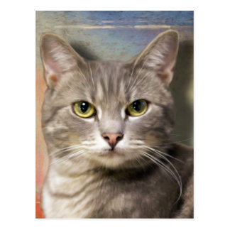 Pookie the Gray Cat Postcard