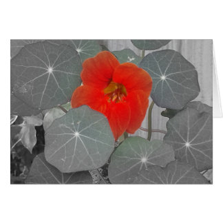Pop of red flower, Blank Greeting Card