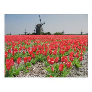Popart Windmills Red Tulips Postcard