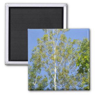 Poplar Tree Under Blue Sky Magnet
