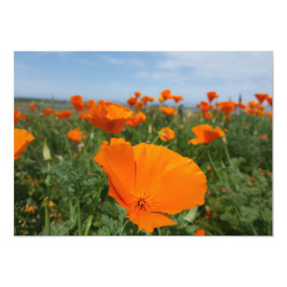 Poppies again 13 cm x 18 cm invitation card