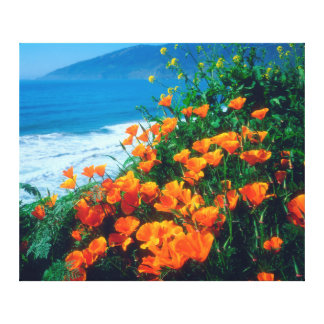 Poppies along the Pacific Coast near Big Sur Gallery Wrapped Canvas