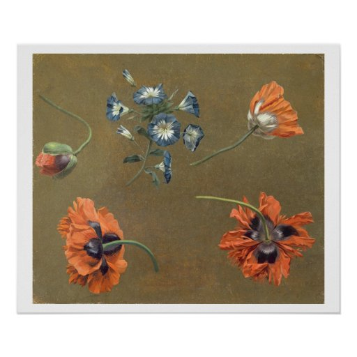 Poppies and Tradascanthus (oil on canvas) Posters