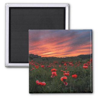 Poppies at Bamburgh Magnet