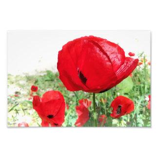 Poppies Dreamy Flowers Photo Print