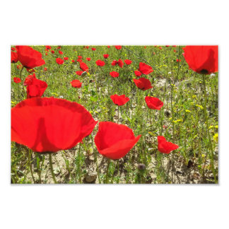 Poppies Dreamy Flowers Photograph
