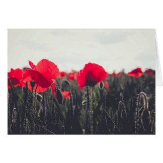 Poppies Greetings Card