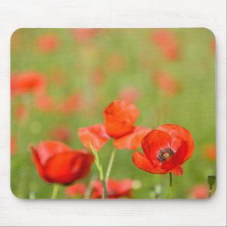 Poppies in a poppy field mousepad