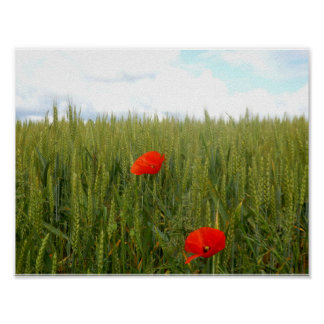 Poppies in a Wheat Field Value Poster Paper