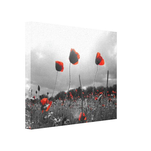 Poppies in Black,White and Red Gallery Wrapped Canvas